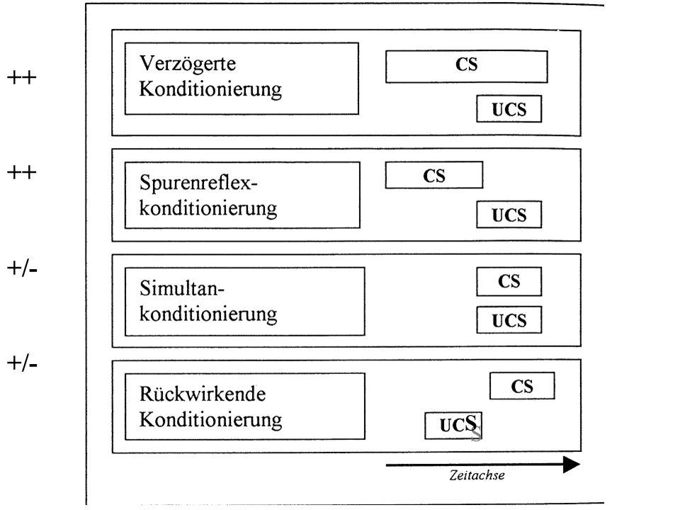 2. Zeitliche Aufeinanderfolge von bedingtem (CS) und unbedingtem Reiz (UCS) CS vor UCS Verzögerte Konditionierung Spurenreflex-Konditionierung optimal