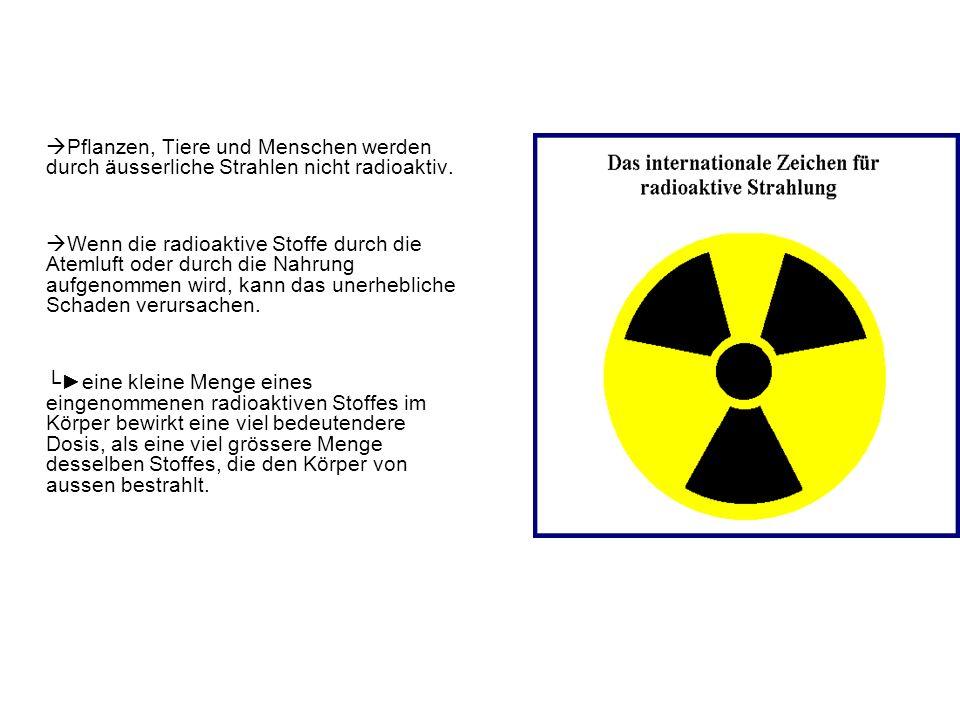 Pflanzen, Tiere und Menschen werden durch äusserliche Strahlen nicht radioaktiv. Wenn die radioaktive Stoffe durch die Atemluft oder durch die Nahrung