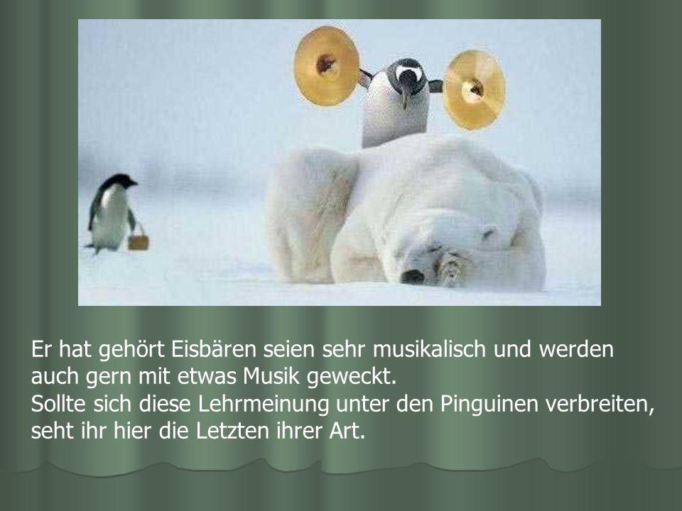 Er hat gehört Eisbären seien sehr musikalisch und werden auch gern mit etwas Musik geweckt. Sollte sich diese Lehrmeinung unter den Pinguinen verbreit