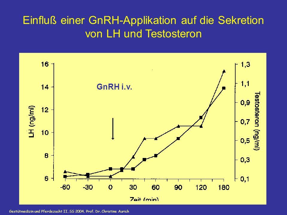 Gestütmedizin und Pferdezucht II, SS 2004, Prof. Dr. Christine Aurich GnRH i.v. Einfluß einer GnRH-Applikation auf die Sekretion von LH und Testostero