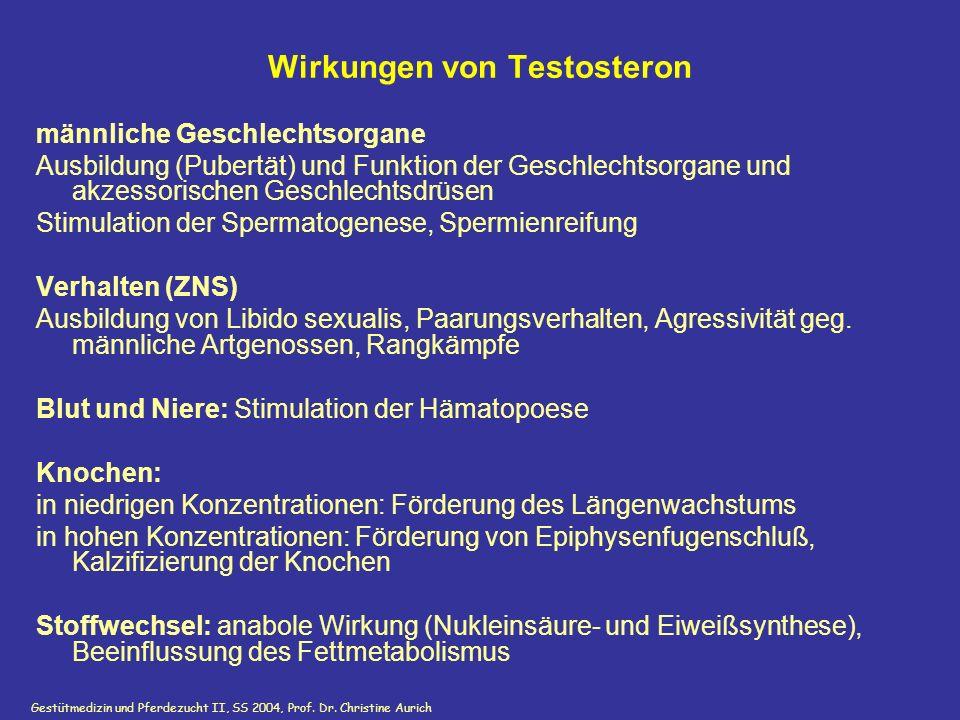 Gestütmedizin und Pferdezucht II, SS 2004, Prof. Dr. Christine Aurich Wirkungen von Testosteron männliche Geschlechtsorgane Ausbildung (Pubertät) und