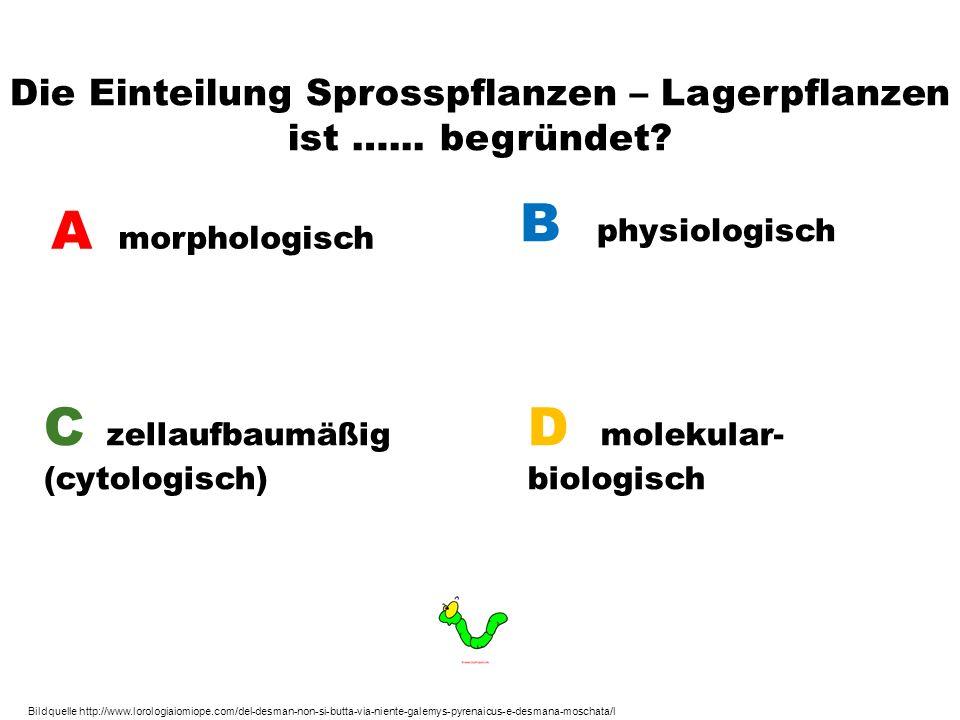 Die Einteilung Sprosspflanzen – Lagerpflanzen ist …... begründet? A morphologisch B physiologisch C zellaufbaumäßig (cytologisch) D molekular- biologi