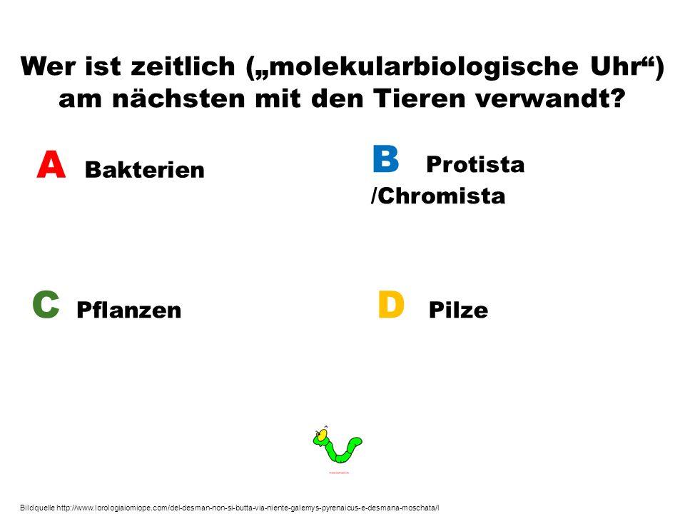 Wer ist zeitlich (molekularbiologische Uhr) am nächsten mit den Tieren verwandt? A Bakterien B Protista /Chromista C Pflanzen D Pilze Bildquelle http: