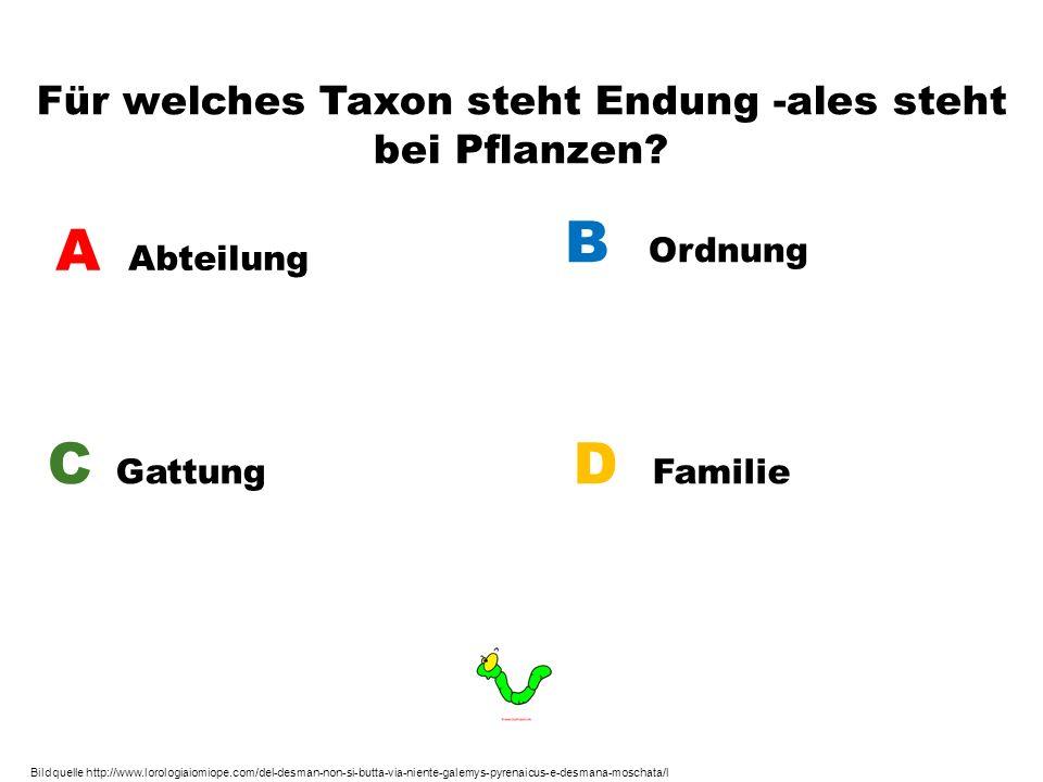 Für welches Taxon steht Endung -ales steht bei Pflanzen? A Abteilung B Ordnung C Gattung D Familie Bildquelle http://www.lorologiaiomiope.com/del-desm