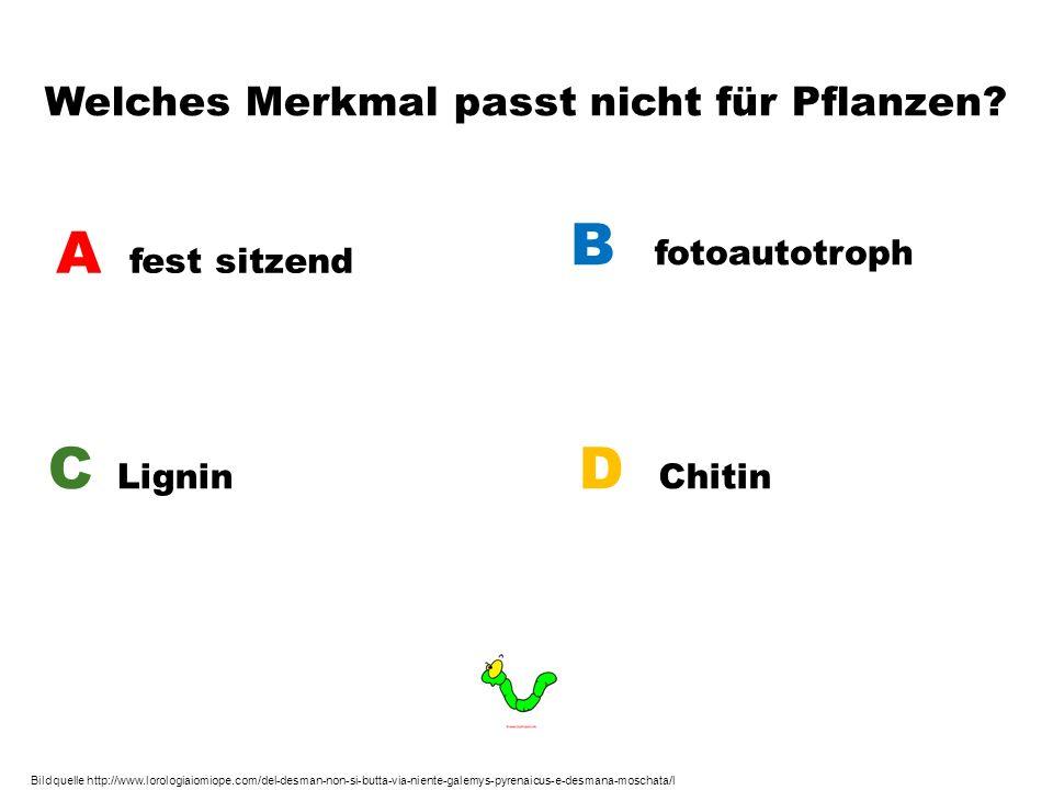 Welches Merkmal passt nicht für Pflanzen? A fest sitzend B fotoautotroph C Lignin D Chitin Bildquelle http://www.lorologiaiomiope.com/del-desman-non-s
