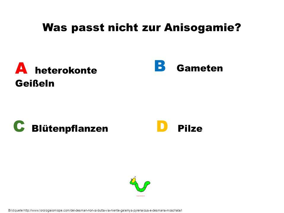 Was passt nicht zur Anisogamie? A heterokonte Geißeln B Gameten C Blütenpflanzen D Pilze Bildquelle http://www.lorologiaiomiope.com/del-desman-non-si-