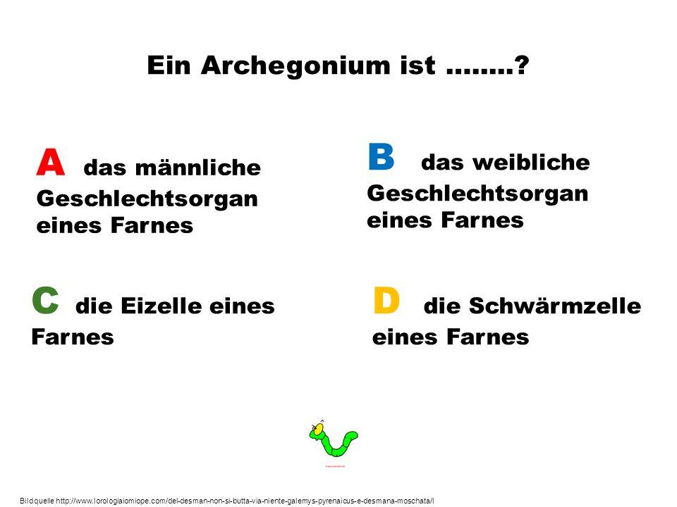 Ein Archegonium ist ….....? A das männliche Geschlechtsorgan eines Farnes B das weibliche Geschlechtsorgan eines Farnes C die Eizelle eines Farnes D d
