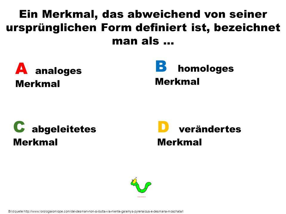 Ein Merkmal, das abweichend von seiner ursprünglichen Form definiert ist, bezeichnet man als … A analoges Merkmal B homologes Merkmal C abgeleitetes M