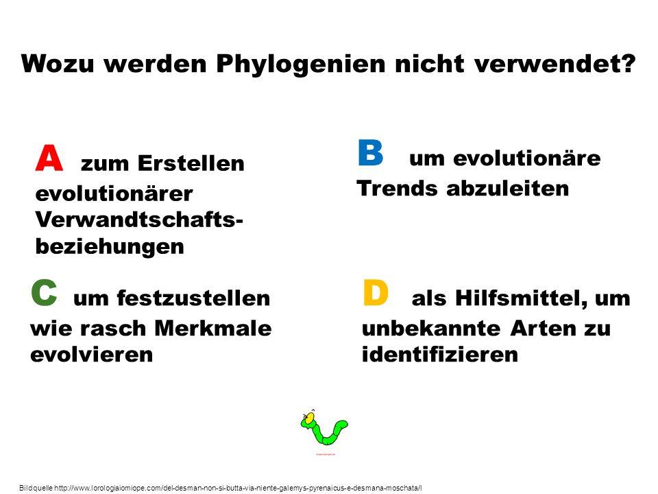 Wozu werden Phylogenien nicht verwendet? A zum Erstellen evolutionärer Verwandtschafts- beziehungen B um evolutionäre Trends abzuleiten C um festzuste