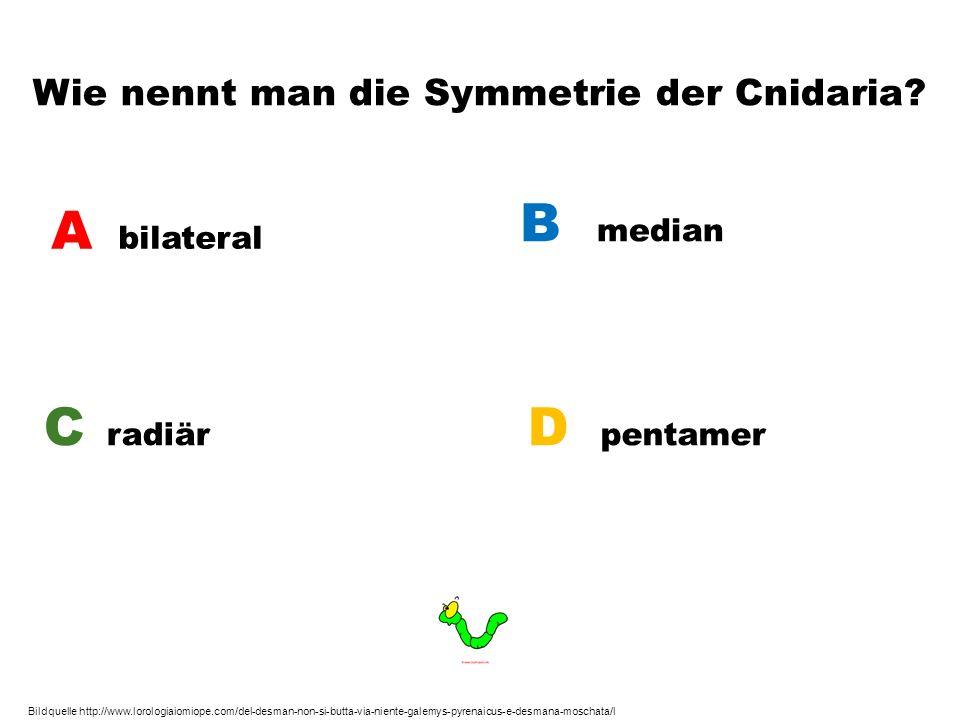 Wie nennt man die Symmetrie der Cnidaria? A bilateral B median C radiär D pentamer Bildquelle http://www.lorologiaiomiope.com/del-desman-non-si-butta-