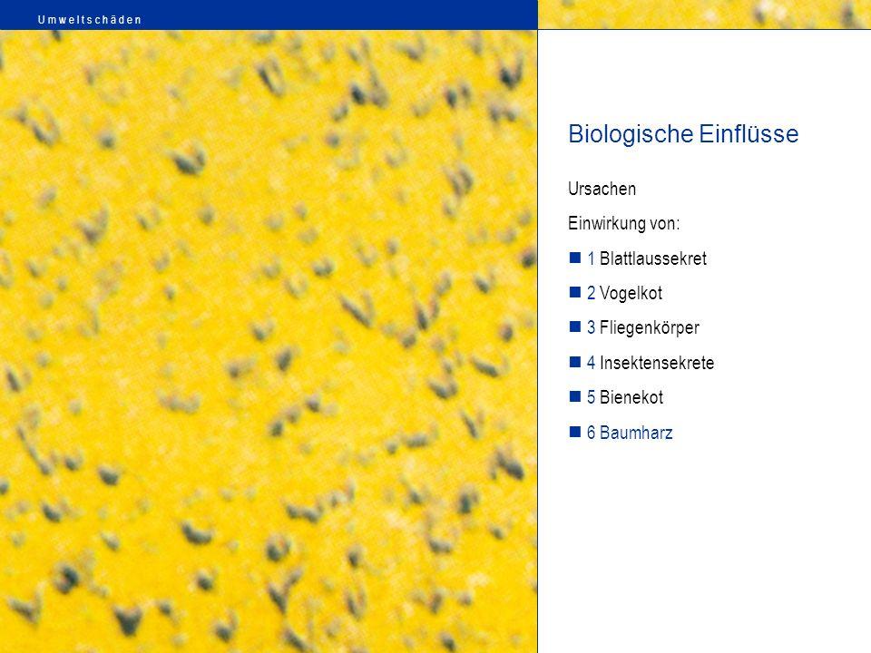 Ursachen Einwirkung von: 1 Blattlaussekret 2 Vogelkot 3 Fliegenkörper 4 Insektensekrete 5 Bienekot 6 Baumharz Biologische Einflüsse U m w e l t s c h
