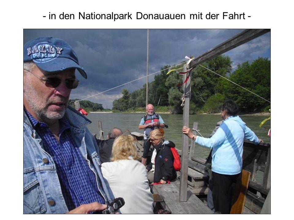 - in den Nationalpark Donauauen mit der Fahrt -