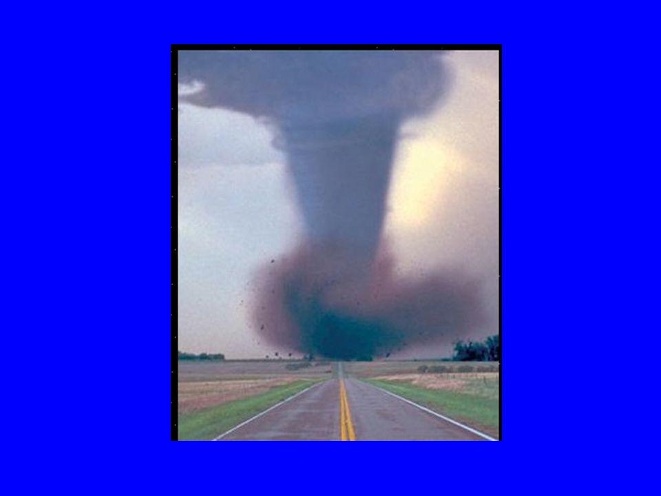Zyklon Zyklone sind tropische Regenwald- Stürme.Zyklone sind besonders gefährlich für Tiere.