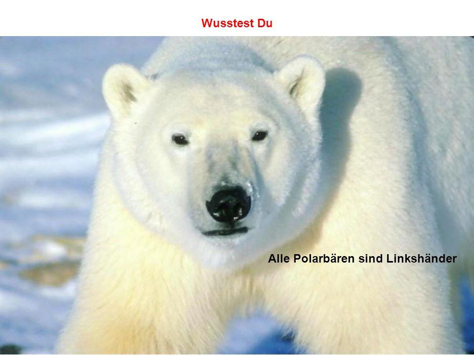 Alle Polarbären sind Linkshänder Wusstest Du