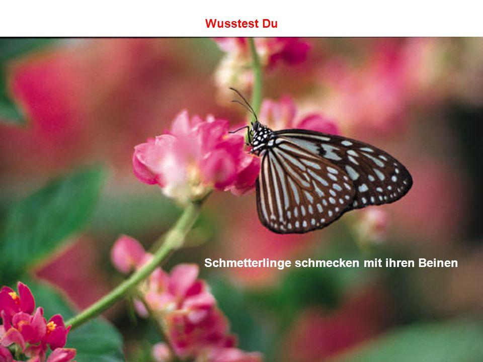 Schmetterlinge schmecken mit ihren Beinen Wusstest Du