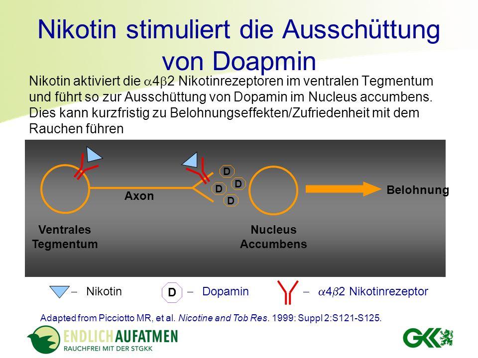 Nikotin stimuliert die Ausschüttung von Doapmin Nikotin aktiviert die 4 2 Nikotinrezeptoren im ventralen Tegmentum und führt so zur Ausschüttung von D