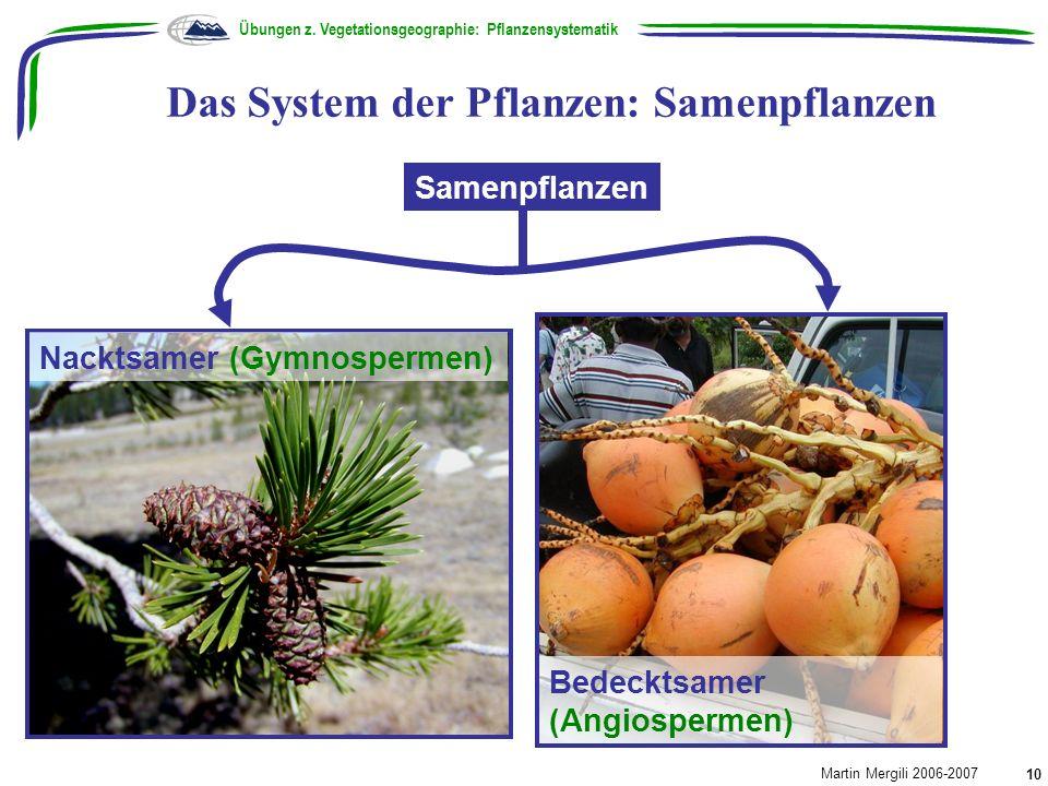Das System der Pflanzen: Samenpflanzen Übungen z. Vegetationsgeographie: Pflanzensystematik Martin Mergili 2006-2007 10 Samenpflanzen Bedecktsamer (An