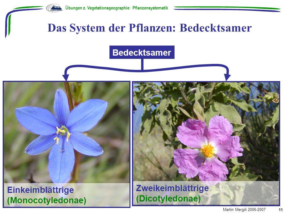 Das System der Pflanzen: Bedecktsamer Übungen z. Vegetationsgeographie: Pflanzensystematik Martin Mergili 2006-2007 11 Bedecktsamer Einkeimblättrige (