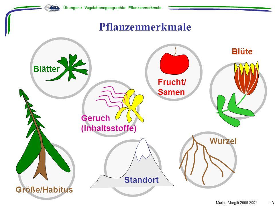 Pflanzenmerkmale Übungen z. Vegetationsgeographie: Pflanzenmerkmale Martin Mergili 2006-2007 13 Blüte Wurzel Blätter Größe/Habitus Frucht/ Samen Geruc