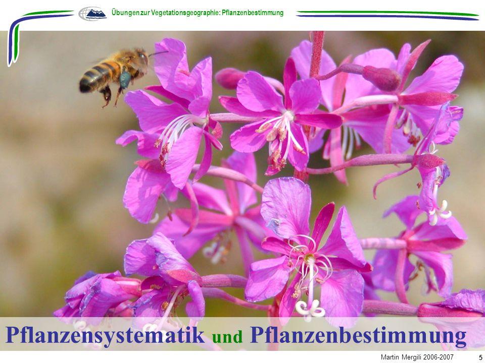 Übungen zur Vegetationsgeographie: Pflanzenbestimmung Martin Mergili 2006-2007 5 Pflanzensystematik und Pflanzenbestimmung