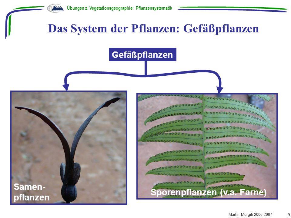 Das System der Pflanzen: Gefäßpflanzen Übungen z. Vegetationsgeographie: Pflanzensystematik Martin Mergili 2006-2007 9 Gefäßpflanzen Sporenpflanzen (v
