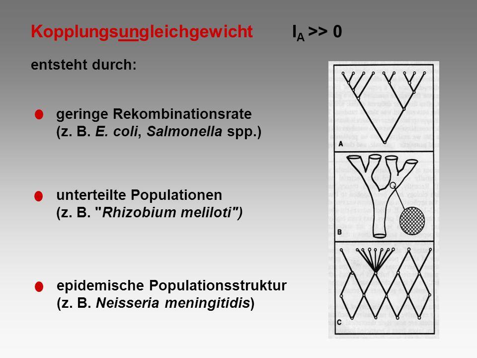 I A >> 0 Kopplungsungleichgewicht entsteht durch: geringe Rekombinationsrate (z. B. E. coli, Salmonella spp.) unterteilte Populationen (z. B.