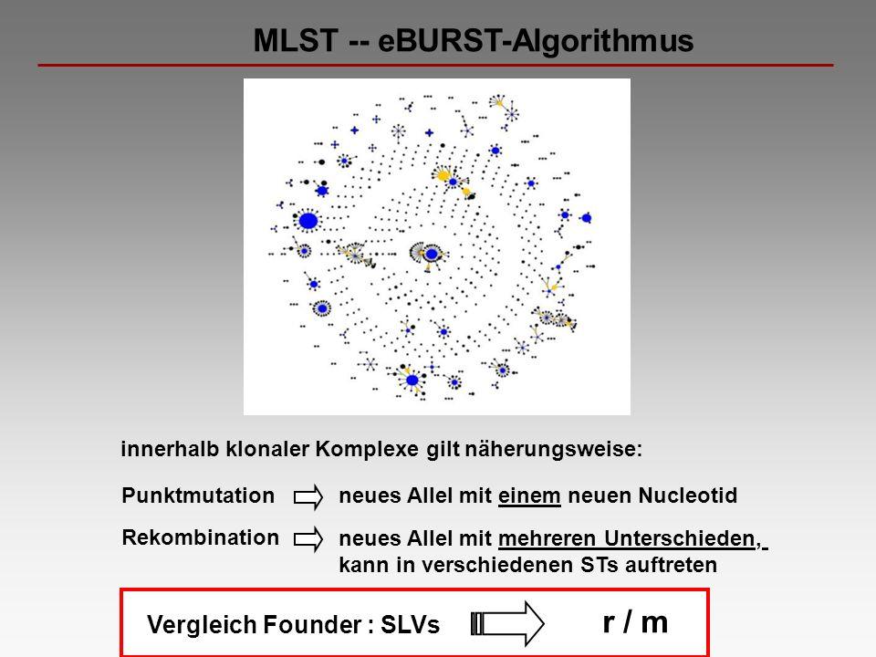 MLST -- eBURST-Algorithmus Punktmutation Rekombination neues Allel mit einem neuen Nucleotid innerhalb klonaler Komplexe gilt näherungsweise: neues Al