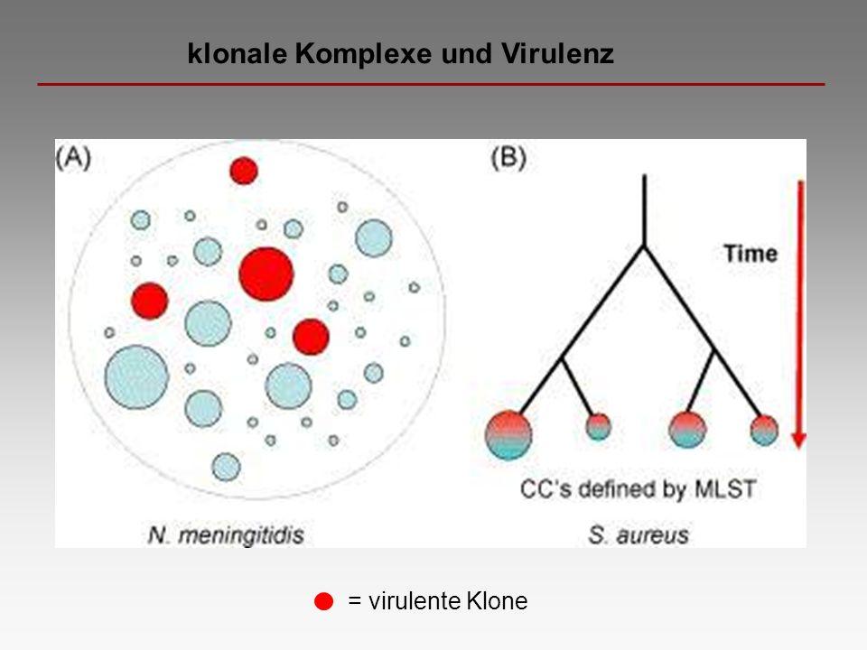 klonale Komplexe und Virulenz = virulente Klone