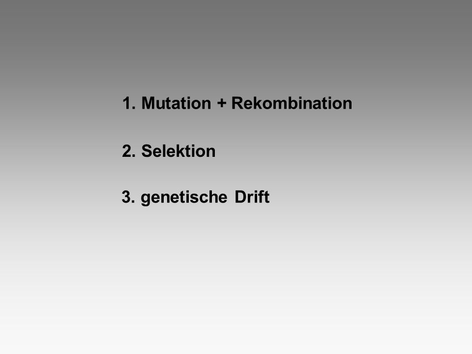 1. Mutation + Rekombination 2. Selektion 3. genetische Drift