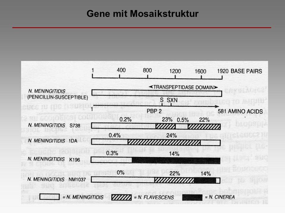 Gene mit Mosaikstruktur