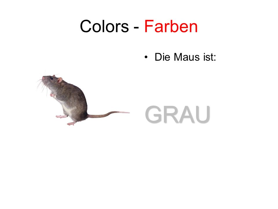 Colors - Farben Die Maus ist:GRAU