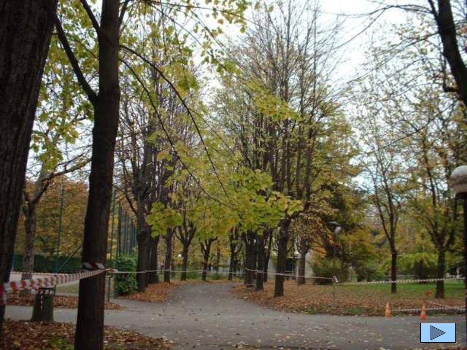 Das ist der Park unserer Schule.