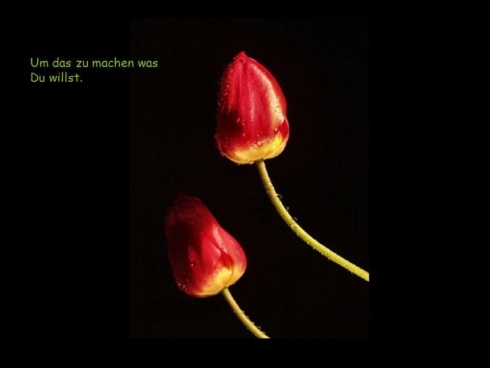 Auf diejenigen die lieben…