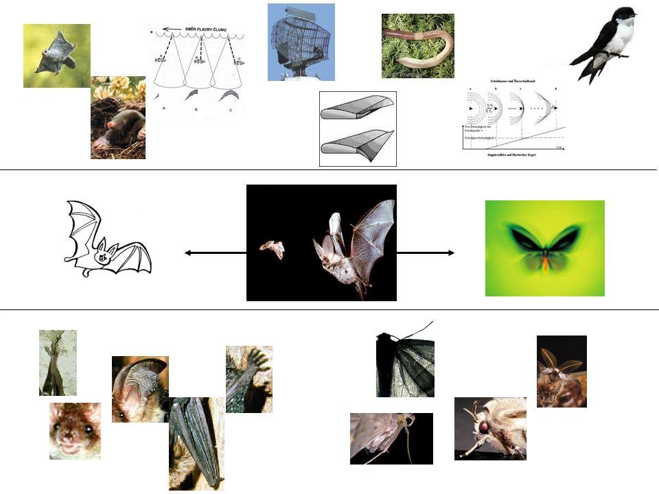 Informationsnägel Abgrenzung, Details sind wichtig, Einzelteile fügen sich zu einem Bild.