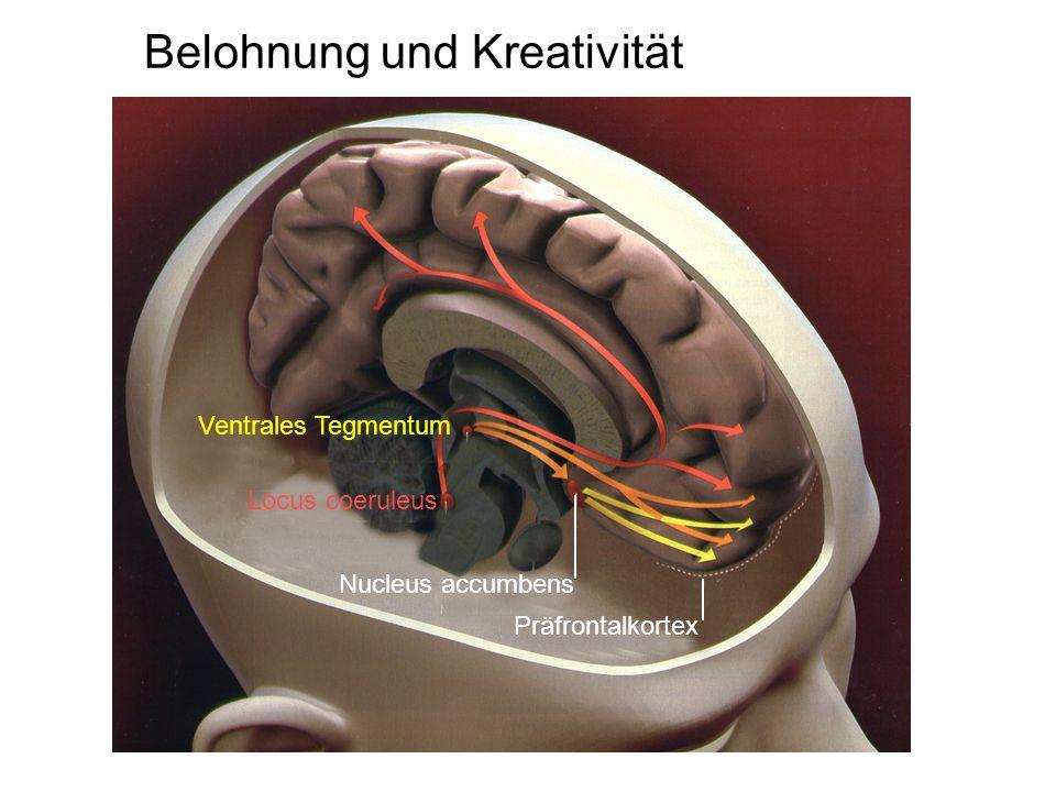 Belohnung und Kreativität Locus coeruleus Ventrales Tegmentum Nucleus accumbens Präfrontalkortex