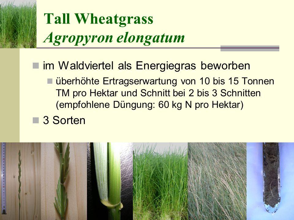 Tall Wheatgrass Agropyron elongatum im Waldviertel als Energiegras beworben überhöhte Ertragserwartung von 10 bis 15 Tonnen TM pro Hektar und Schnitt bei 2 bis 3 Schnitten (empfohlene Düngung: 60 kg N pro Hektar) 3 Sorten