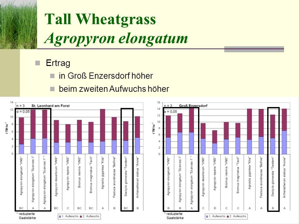 Tall Wheatgrass Agropyron elongatum Ertrag in Groß Enzersdorf höher beim zweiten Aufwuchs höher