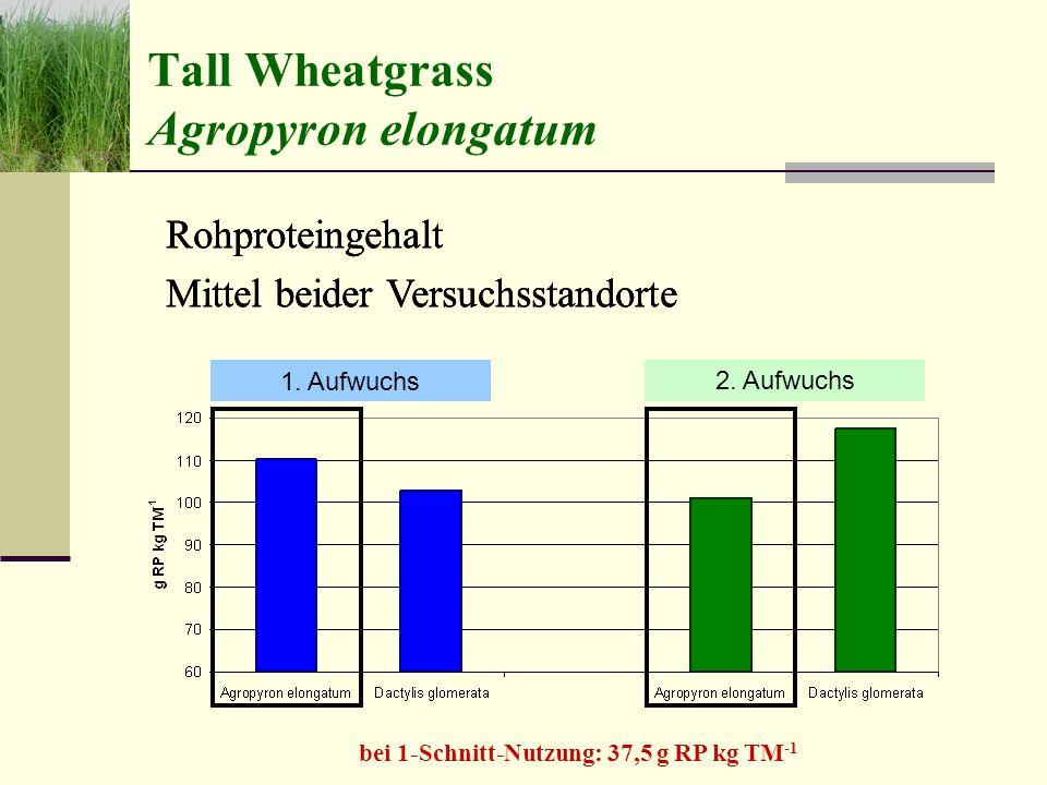 Tall Wheatgrass Agropyron elongatum 1.Aufwuchs2.