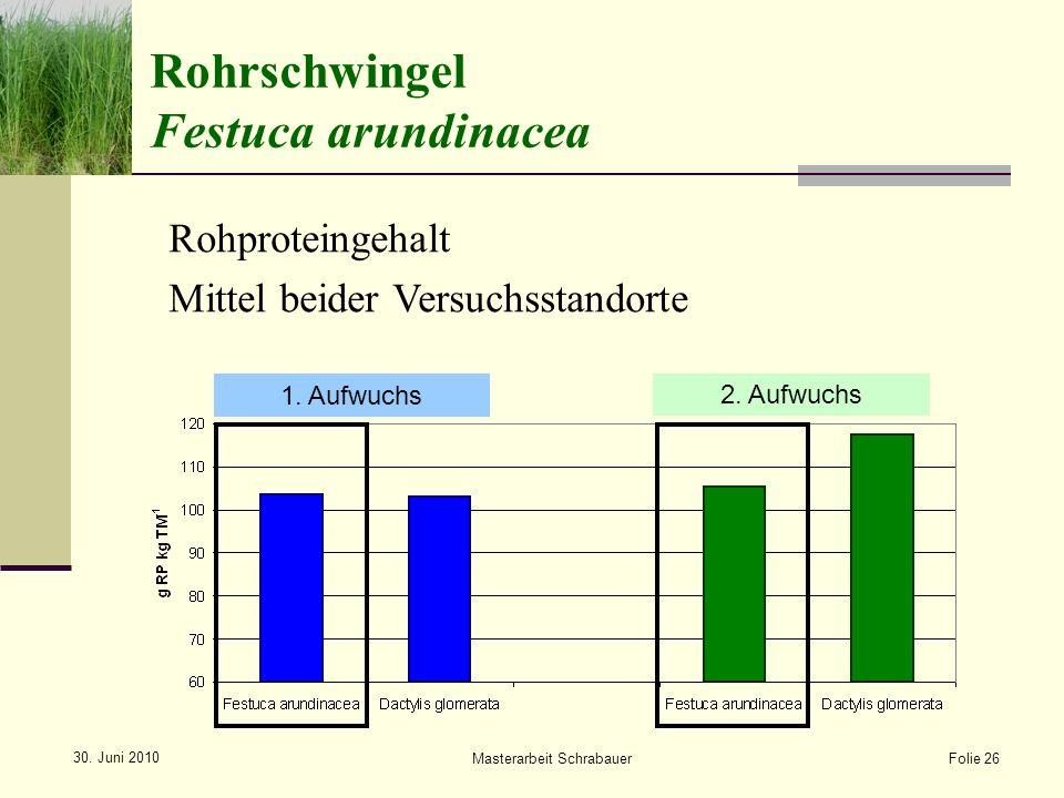 Rohrschwingel Festuca arundinacea 1.Aufwuchs 2.