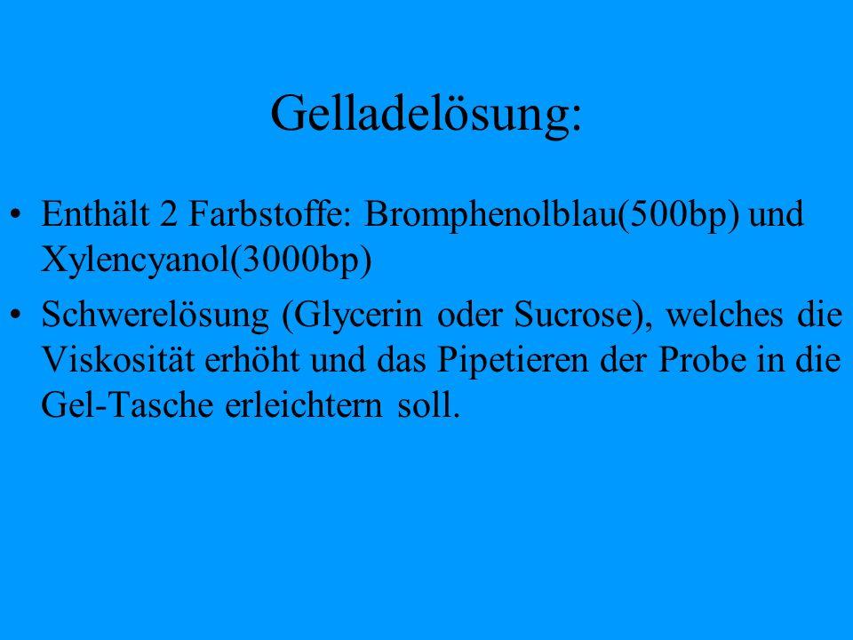 Gelladelösung: Enthält 2 Farbstoffe: Bromphenolblau(500bp) und Xylencyanol(3000bp) Schwerelösung (Glycerin oder Sucrose), welches die Viskosität erhöh