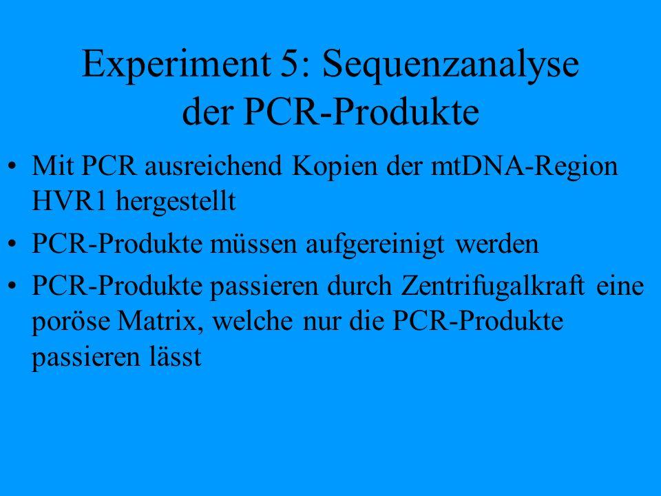 Experiment 5: Sequenzanalyse der PCR-Produkte Mit PCR ausreichend Kopien der mtDNA-Region HVR1 hergestellt PCR-Produkte müssen aufgereinigt werden PCR