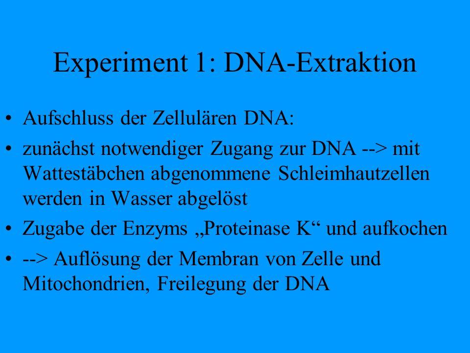 Experiment 1: DNA-Extraktion Aufschluss der Zellulären DNA: zunächst notwendiger Zugang zur DNA --> mit Wattestäbchen abgenommene Schleimhautzellen we