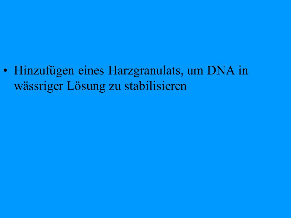 Experiment 2: PCR Ziel: Vervielfältigung der hyper-variablen mtDNA- Region 1 und 2 (HVR 1+2) Durchführung: Vermehrung bestimmter DNA- Stücke(HVR 1+2) durch Anlagerung von Primern als Startmoleküle des Enzyms DNA-Polymerase