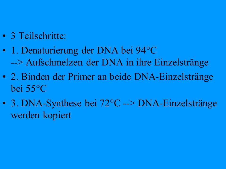 3 Teilschritte: 1. Denaturierung der DNA bei 94°C --> Aufschmelzen der DNA in ihre Einzelstränge 2. Binden der Primer an beide DNA-Einzelstränge bei 5