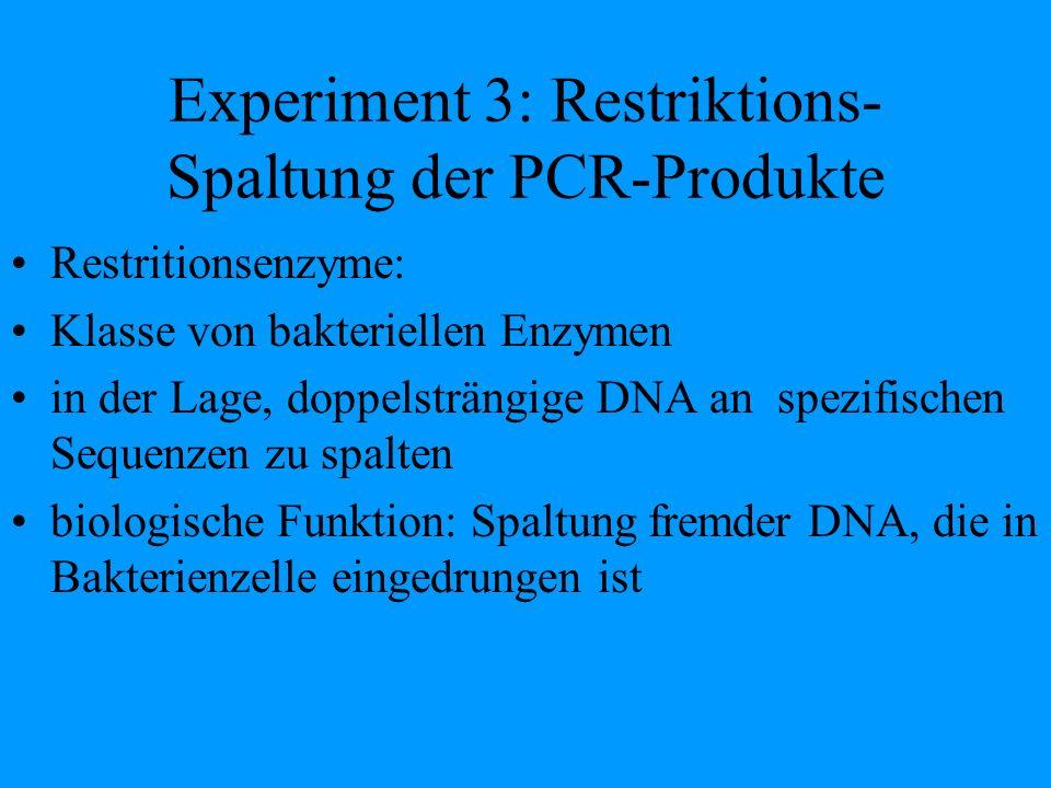 Experiment 3: Restriktions- Spaltung der PCR-Produkte Restritionsenzyme: Klasse von bakteriellen Enzymen in der Lage, doppelsträngige DNA an spezifisc