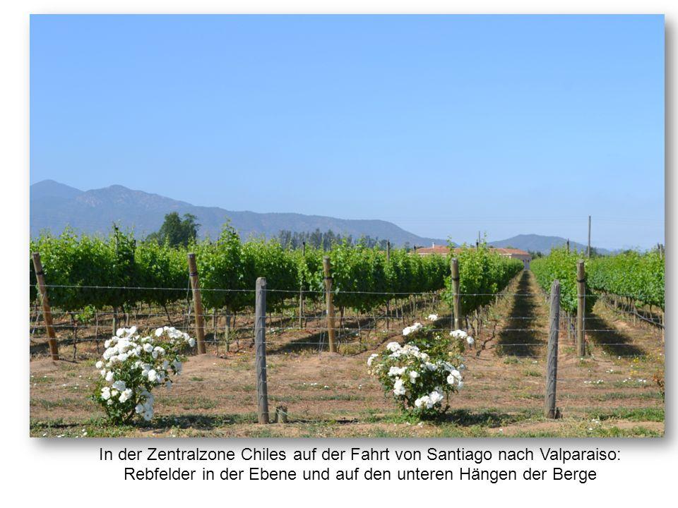 In der Zentralzone Chiles auf der Fahrt von Santiago nach Valparaiso: Rebfelder in der Ebene und auf den unteren Hängen der Berge