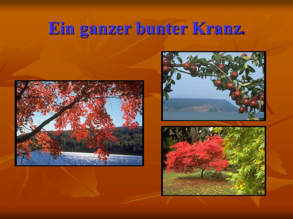 Herbst Es ist Herbst.Es ist Herbst. Bunte Blatter fliegen.