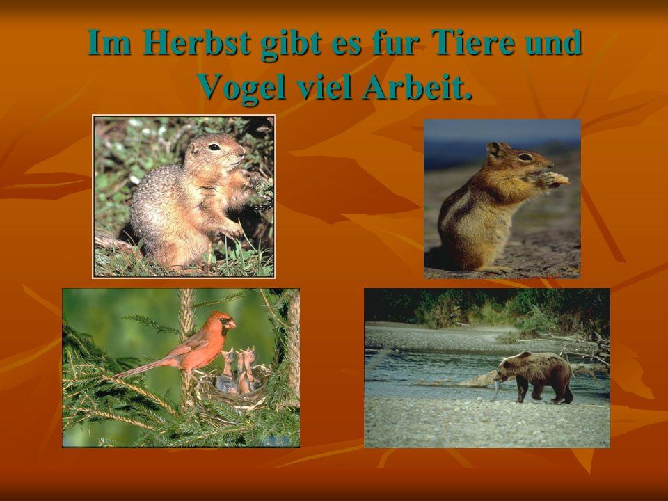 Im Herbst gibt es fur Tiere und Vogel viel Arbeit.