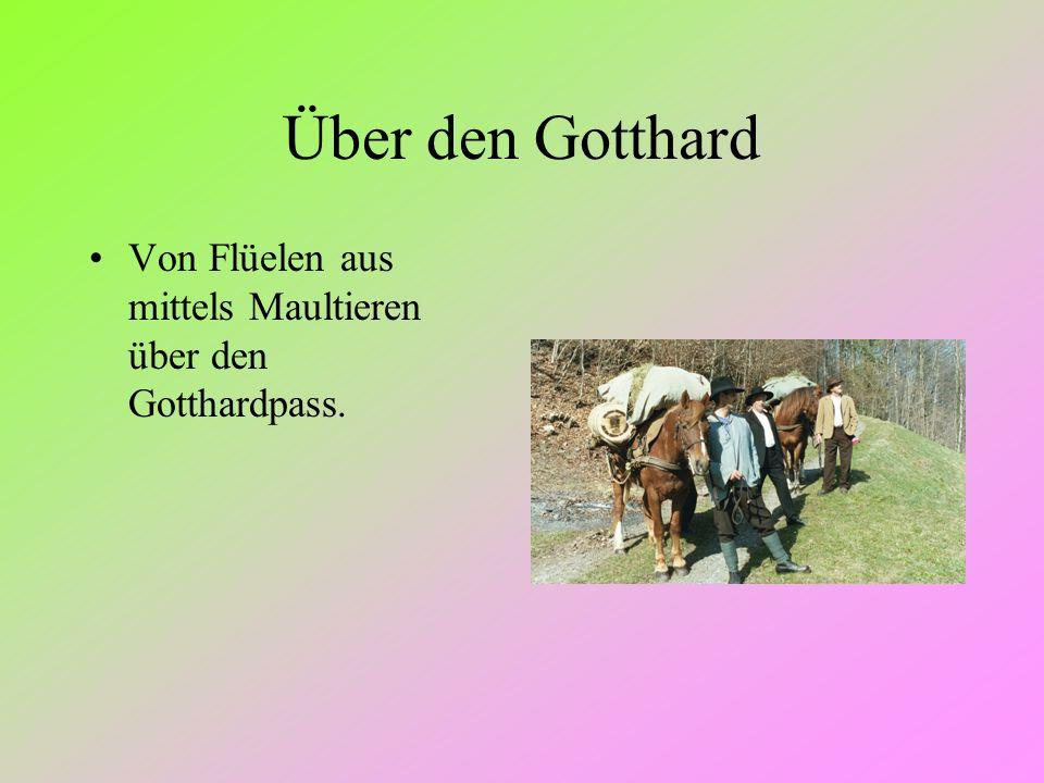 Über den Gotthard Von Flüelen aus mittels Maultieren über den Gotthardpass.