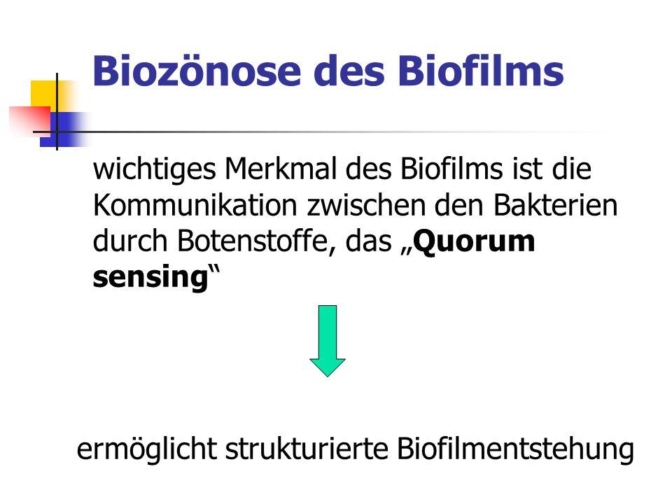 Biozönose des Biofilms wichtiges Merkmal des Biofilms ist die Kommunikation zwischen den Bakterien durch Botenstoffe, das Quorum sensing ermöglicht st